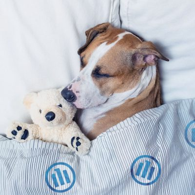 Tierkrankenversicherung