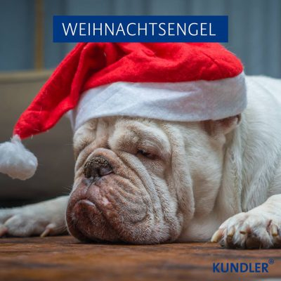 weihnachtsenge - wir lieben hunde